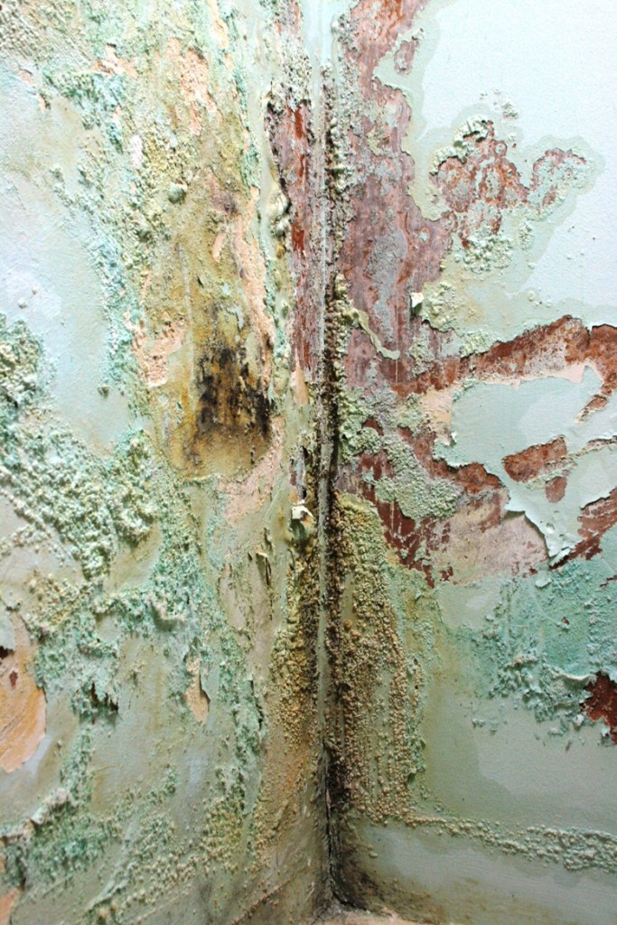 Safeguard Dampness Conference